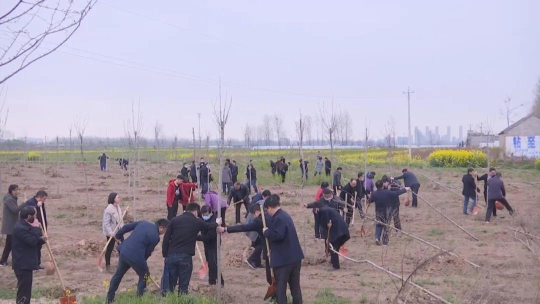 胡明文、熊国洪等县领导参加义务植树活动